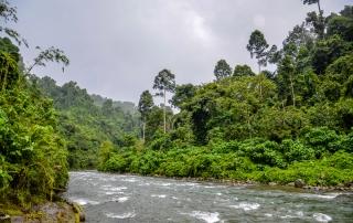 Rzeka Bohorok płynąca przez sumatrzańską dżunglę (CZA_8100)