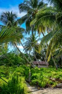 Domek w zagajniku palm na wyspie Tailana. Wyspy Banyak, Indonezja