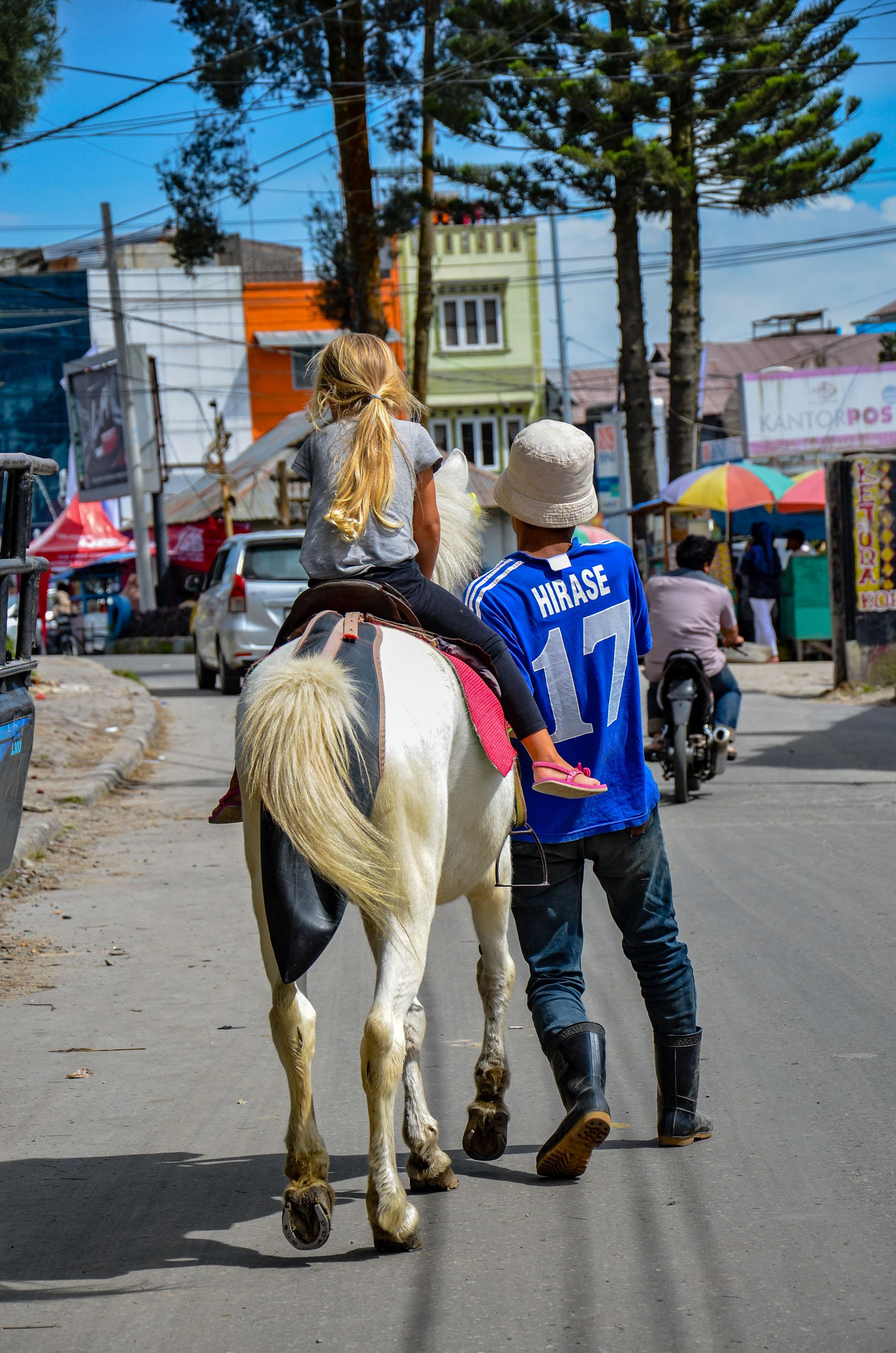 Konia trzeba było naprowadzać na odpowiedni tor. Berastagi, Indonezja.